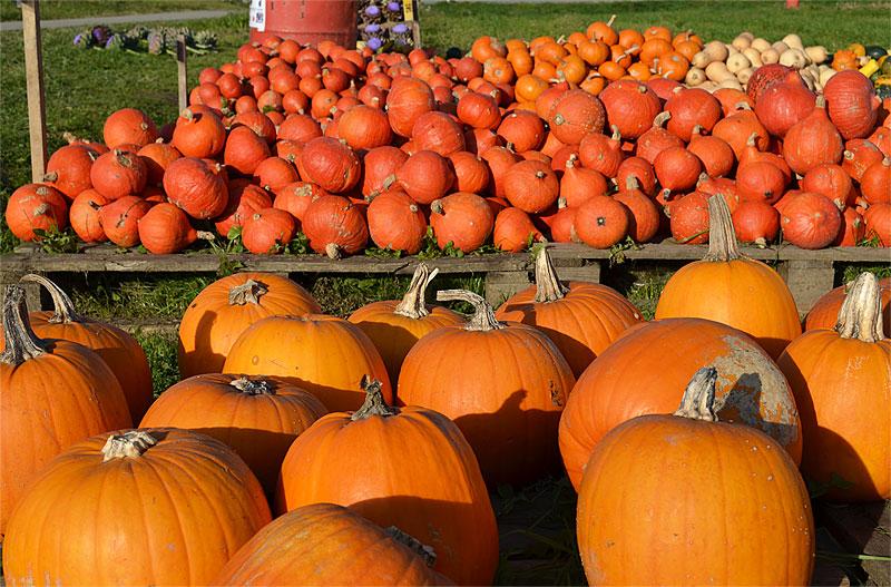 Halloween pumpkins Bavaria